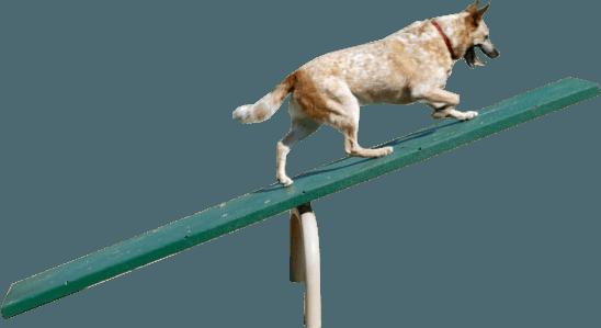 Site Amenities Site Furnishings Sports Equipment Dog