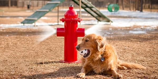 misting fire hydrant