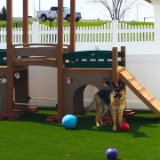 Kennel Club playground