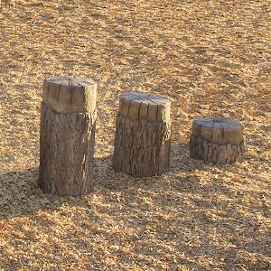 Playground Tree Stumps Age 5 - 12
