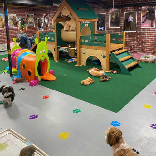 deluxe k9 kennel club playground