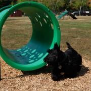 p-39417-doggiecrawl_10.jpg