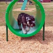 p-39417-doggiecrawl_11.jpg
