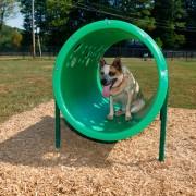 p-39417-doggiecrawl_9.jpg