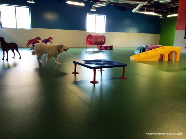 Novice Dog Obstacle Course