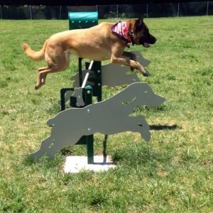 Dog Park Agility Equipment